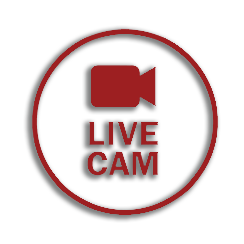Live Webcam Stream